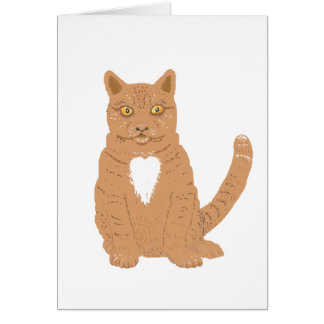 Sweet Cat on almost everythiing imaginable. Card