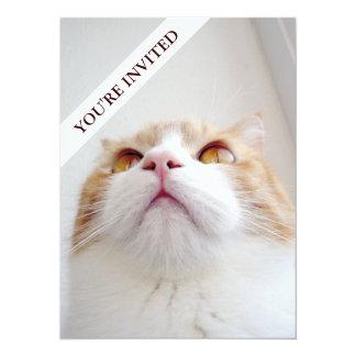 Sweet Cat Simple Plain invitation