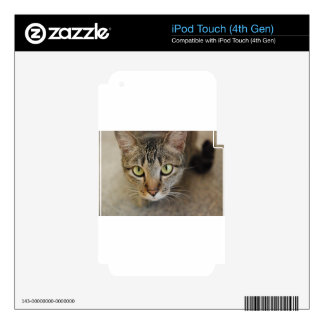 Sweet Cat iPod Touch 4G Skin