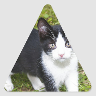 Sweet Cat Triangle Stickers