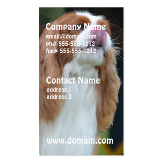 Sweet Cavalier King Charles Spaniel Double-Sided Standard Business Cards (Pack Of 100)