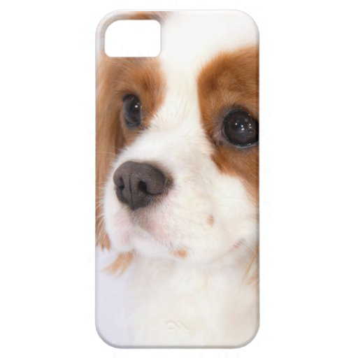 Sweet Cavalier King Charles Spaniel iphone 5g Case iPhone 5 Cover
