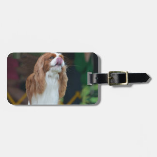 Sweet Cavalier King Charles Spaniel Tag For Luggage