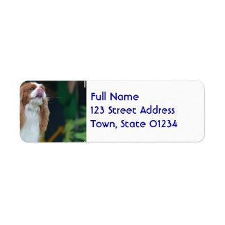 Sweet Cavalier King Charles Spaniel Return Address Label