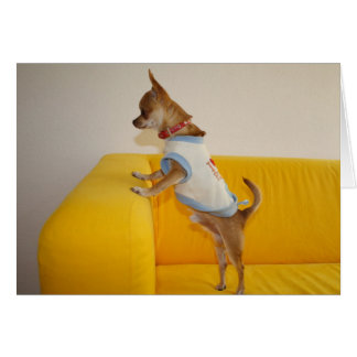 Sweet Charlie Chihuahua Greeting Cards