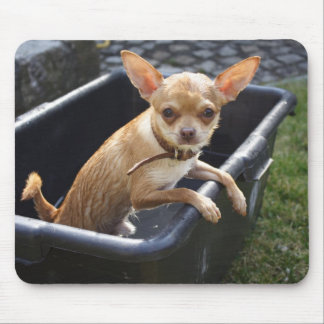 Sweet Charlie Chihuahua Mouse Pad