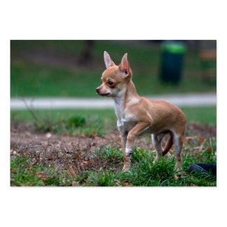 Sweet Chihuahua Puppy Gundog Wannabe Large Business Cards (Pack Of 100)