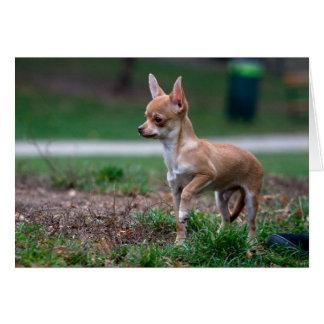Sweet Chihuahua Puppy Gundog Wannabe Stationery Note Card