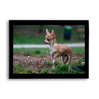 Sweet Chihuahua Puppy Gundog Wannabe Envelope