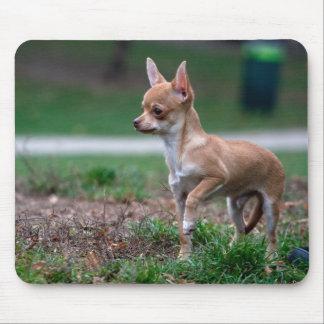 Sweet Chihuahua Puppy Gundog Wannabe Mouse Pad