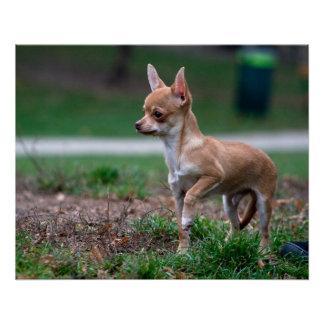Sweet Chihuahua Puppy Gundog Wannabe Poster