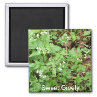 Sweet Cicely Magnet