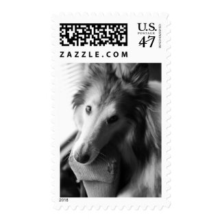 Sweet Collie Postage