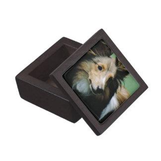 Sweet Collie Premium Gift Box