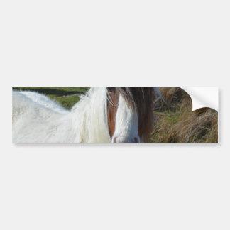 Sweet Connemera Pony Bumper Sticker