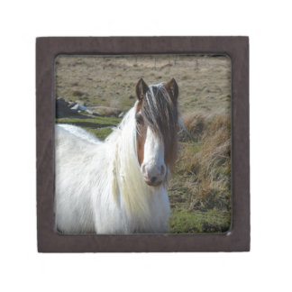 Sweet Connemera Pony Keepsake Box