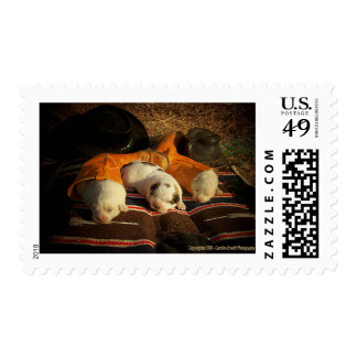 Sweet Cowboy Dreams Postage