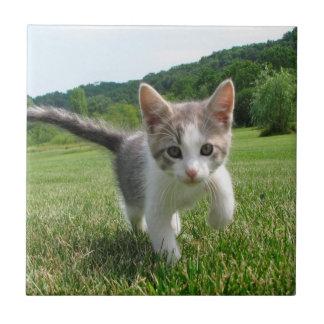 Sweet Cute Cat Tile