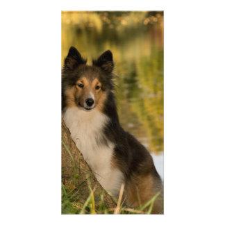 Sweet Cute Dog Card