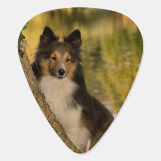 Sweet Cute Dog Guitar Pick