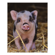 Sweet Cute Pig Flyer
