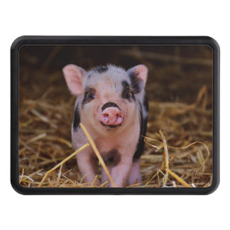 Sweet Cute Pig Hitch Cover