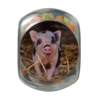 Sweet Cute Pig Jelly Belly Candy Jar