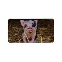Sweet Cute Pig Label