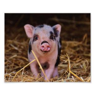 Sweet Cute Pig Photo Print