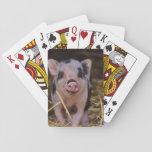 "Sweet Cute Pig Playing Cards<br><div class=""desc"">pig,  piglet,  farm,  animal,  wildlife,  nature,  photo,  meet,  food,  love</div>"