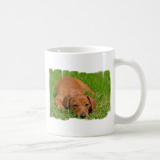 Sweet Daschund Sleeping  Coffee Mug