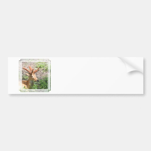 Sweet Deer Bumper Stickers