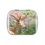 Sweet Deer Candy Tin