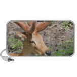 Sweet Deer Speakers