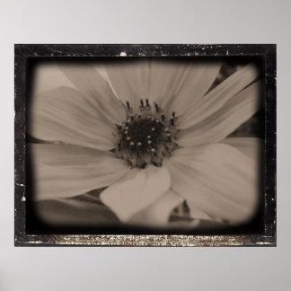 Sweet Diatrope Sunflower Posters