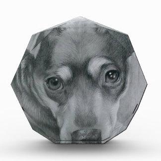 Sweet dog award