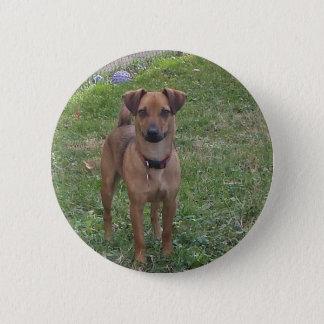 sweet dog button