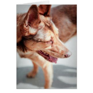 Sweet Dog Card