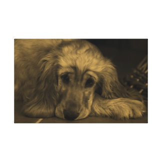 Sweet Dog - Golden Retriever in Sepia Tones Canvas Print