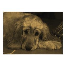 Sweet Dog - Golden Retriever in Sepia Tones Card