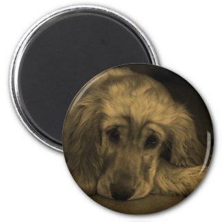 Sweet Dog - Golden Retriever in Sepia Tones Magnet