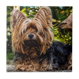 Sweet Dog Pet Ceramic Tile