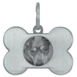 Sweet dog pet name tag