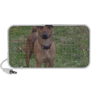 sweet dog travelling speakers