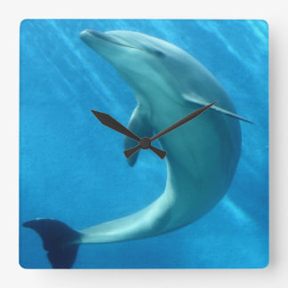 Sweet Dolphin Square Wall Clocks