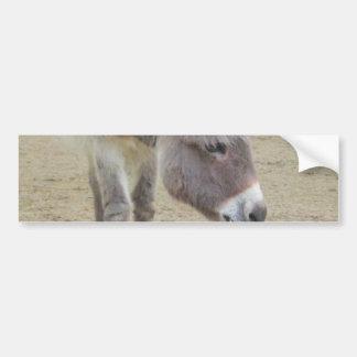 Sweet Donkey, Animal Grey, Horse Family Car Bumper Sticker