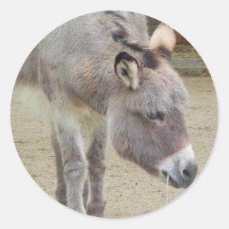 Sweet Donkey, Animal Grey, Horse Family Classic Round Sticker