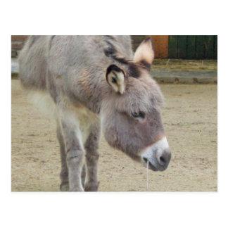 Sweet Donkey, Animal Grey, Horse Family Postcard