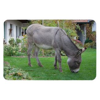 Sweet Donkey In The Garden Magnet