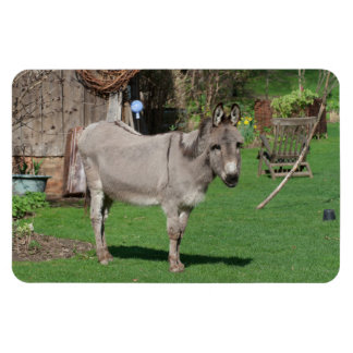 Sweet Donkey In The Garden Magnet